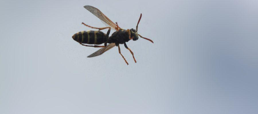Wespen im Dach vertreiben